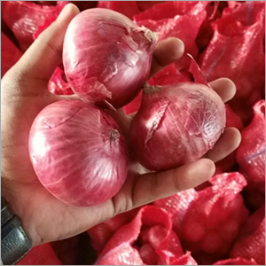 Fresh Double Patti Red Onion