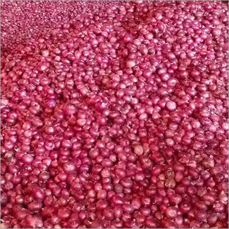Fresh Harvest Pink Onion