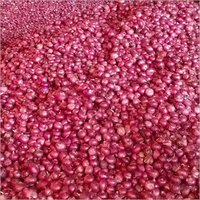Fresh Harvest Pink Onion