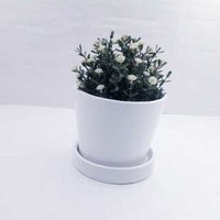white  ceremic  planter  with  plate