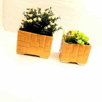 Square bonsai 2pcs
