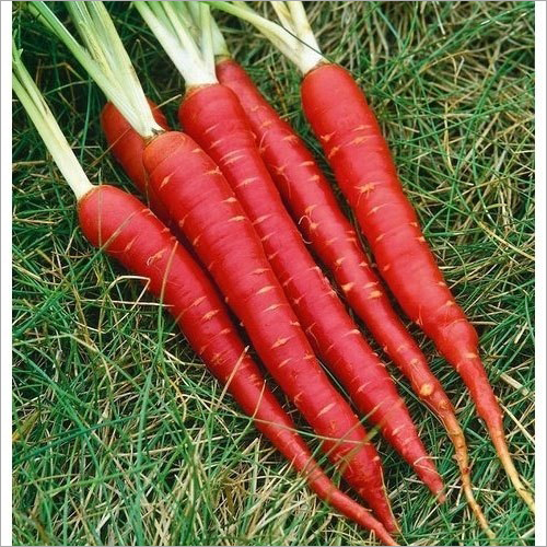 Red Fresh Carrot