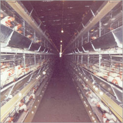Poultry Chicken Battery Cages