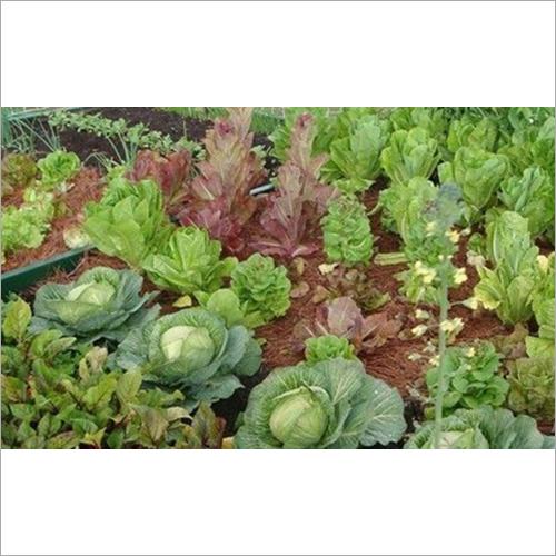 Vegetable Kitchen Garden