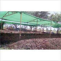 Organic Earthworm Eisenia Fetida