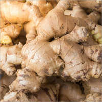 Indian Fresh Ginger