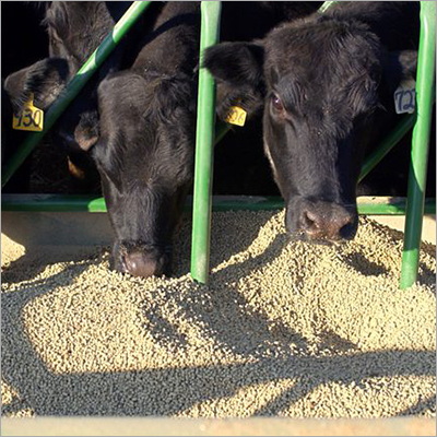 Buffalo Cattle Feed Pellet