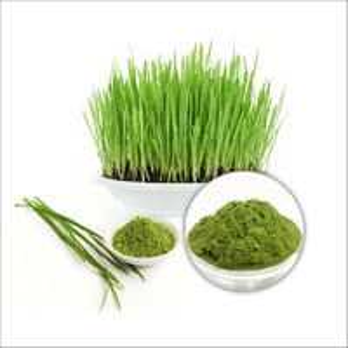 Organic Barley Grass Juice Powder