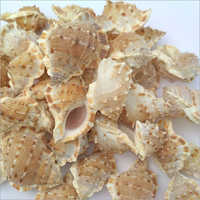 Natural Color Sea Shells