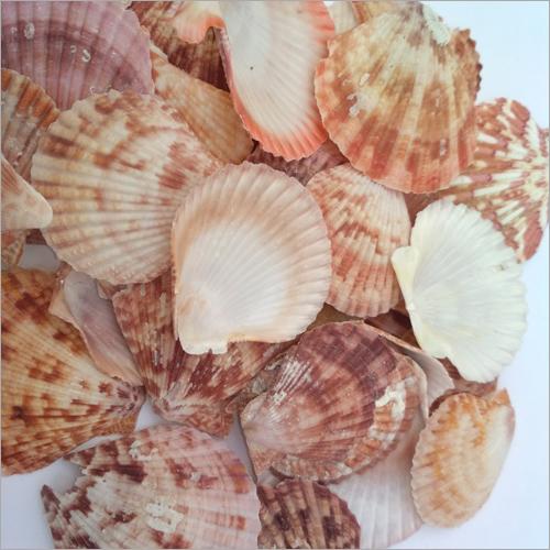 Natural Color Sea Shells