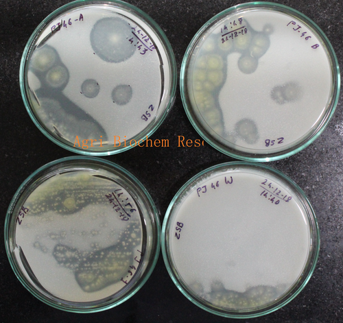 Microbial strain mineral solubilizing Activity