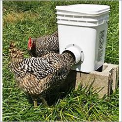 Poultry Chicken Feeder Bucket