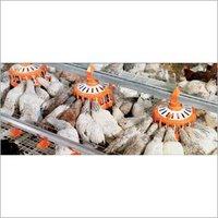 Poultry Farm Feeding System