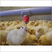 Poultry Nipple Watering System