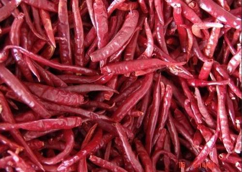 Sanam Stemless Red Chili