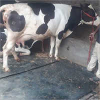 Dairy Consulting Services