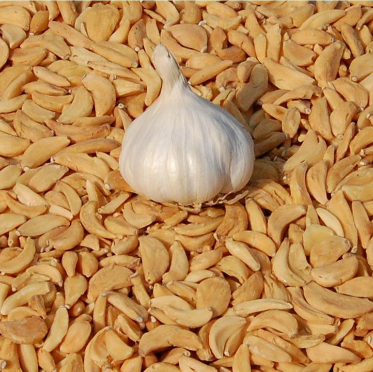 Premium Grade Indian Dehydrated Garlic Flakes