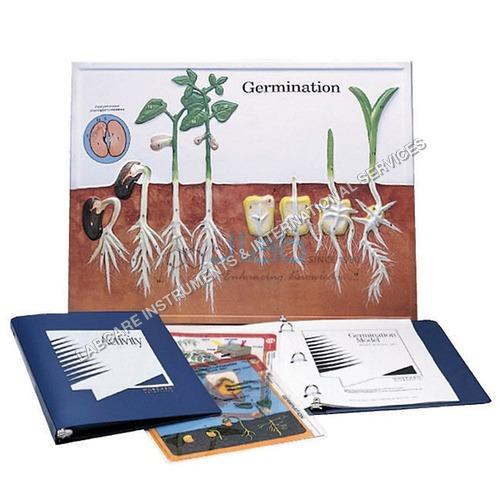 Germination & Angiosperms