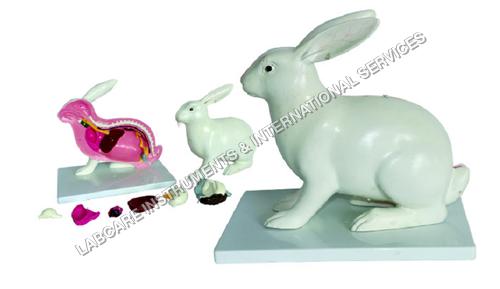 Rabbit Dissection