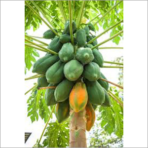 Natural Papaya