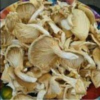 Dried Oyster Organic Mushroom