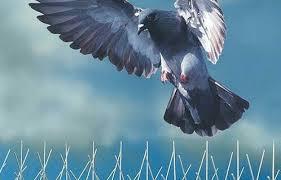 Anti Bird Netting & Spikes