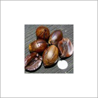 Sal Seeds (Shorea Robusta Seeds)