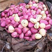 Garcinia Bitter Kola Nuts