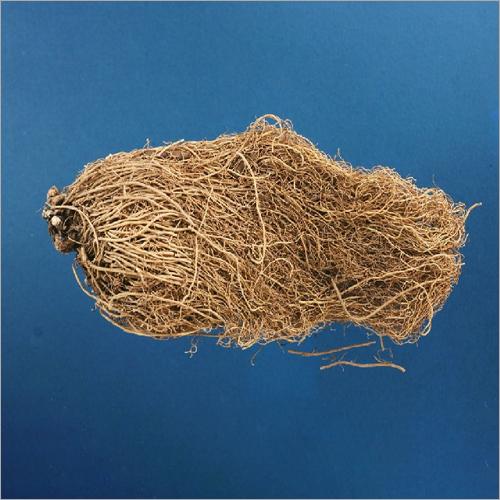 Herba Asari