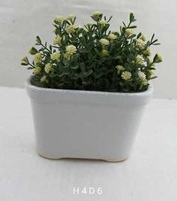 White  tub shape bonsai