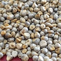 Grade 1 Millet