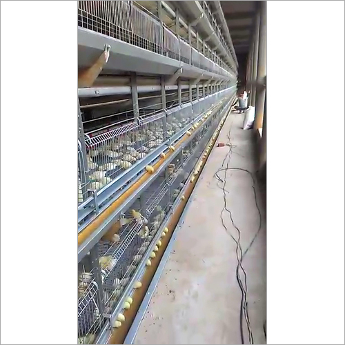 Chick Cum Grower Battery Cages