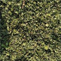 Normal Quality Fenugreek Leaf