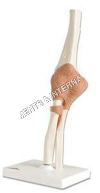 Joints Elbow model