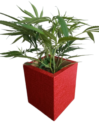 Wooden Square Flower Pot Weight: .300  Kilograms (kg)
