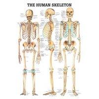 Skeleton system chart