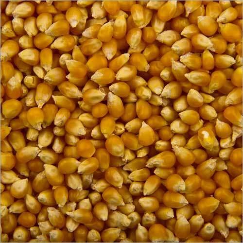 Fresh Corn Seeds
