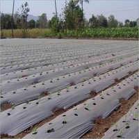 Agricultural Plastic Films