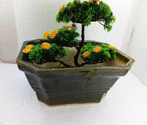 Bonsai M.1