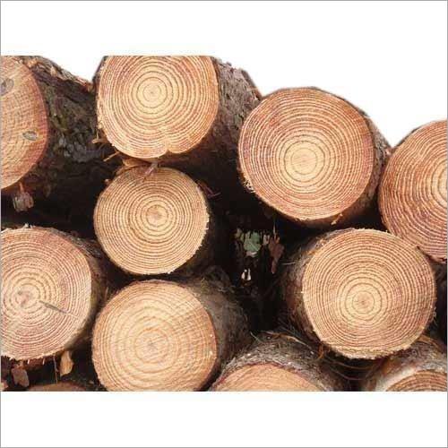 Pine Wood Log