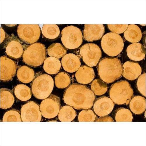Oak Wood Log