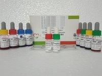 Stained Salmonella Antigen Sets