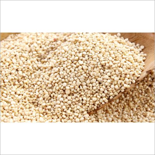 India Organic Quinoa Seeds