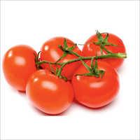 Banganga Prime Tomato Seeds