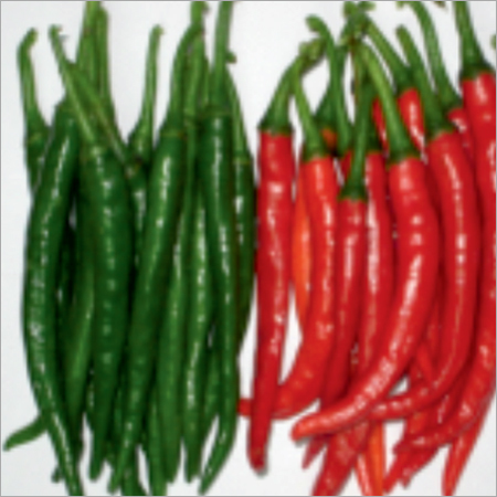 Teja Hot Prime Chilli Seeds