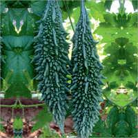 Rupali Prime Bittergourd Seeds
