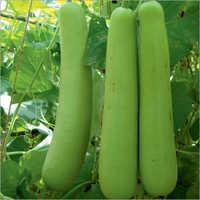 Navjyot Prime Bottle Gourd Seeds