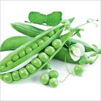 Mansoravar Prime Peas Seeds