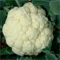 Kosi Prime Cauliflower Seeds