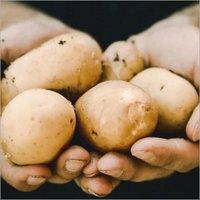 Long Potato